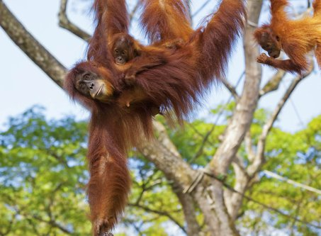 5 Reasons to Visit Borneo in 2021